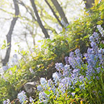 北山的花与叶