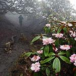 雾里看花什格达
